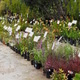 Spring Plant Sale, April 14 @ UCSC Arboretum & Botanic Garden