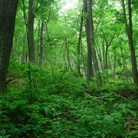 Ecology Walk through The Glen Woods