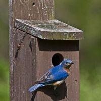 Cavity-nesting Bird Trail Volunteer Training