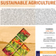 Connecting Sustainability: Sustainable Agriculture