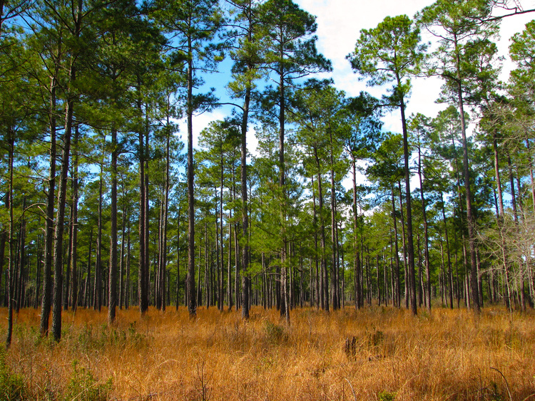 Woodland Management Series: First Look - Pee Dee Region