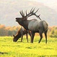 Wild About Elk Teacher Workshop