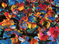 Spring Unveiling: Christopher Burkett