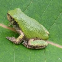 From Eggs to Legs: An Amphibian's Tale