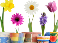 Make and Take: Grow Your Own Flower