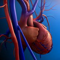 Heart & Vascular Center Grand Rounds - A. Jamil Tajik, MD