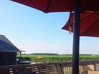 Live Music at Pindar Vineyards