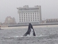 Whale Watching in Nassau County