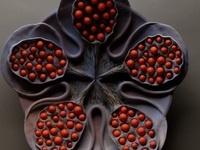 Hsin-Yi Huang & Kings Silk Art