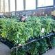 Benton County Master Gardener Plant Sale