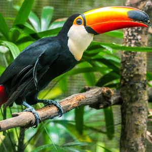 Rain Forest Animals from the Utica Zoo