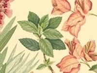 Botanical Illustrations and Scientific Discovery