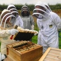 Honey Bee Hive Tours