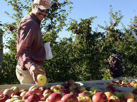 May 9 - Zoom Webinar - Good To Great: Navigating the Ag Labor Maze