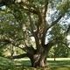 Champion Tree Tour