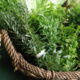 Introduction to Garden Herbalism