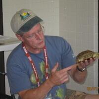 Live! Turtles