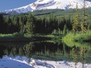 Columbia River Gorge Waterfalls and Mount Hood Tour