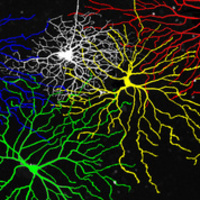Cerebral Cinema: Inception with Dr. Steve Ramirez