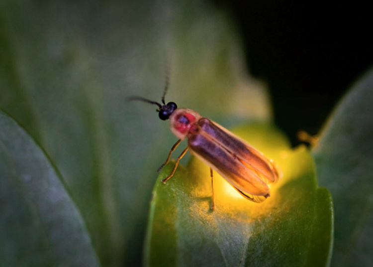 Light Up the Night: Bugs before bedtime