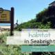 Building Habitat in Seabright