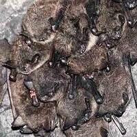 CSP Bat Count