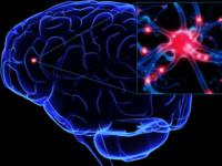 Cornell NeuroNex Symposium