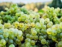 Saturday Seminar: Discovering Willamette Valley Chardonnay