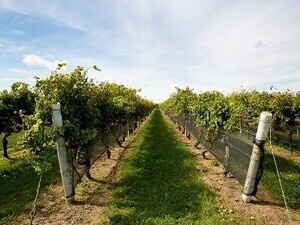 Vineyard & Winery Educational Tour