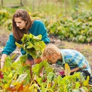 Colgate Community Garden Open Volunteer Hours