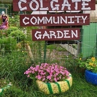 Colgate Community Garden Summer Work Party