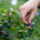 Pick-Your-Own Season at Twin Oaks Farm for Experiential Learning