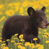 Nature Craft & Story: Bears