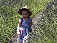 Wayward Winds Lavender U-Pick