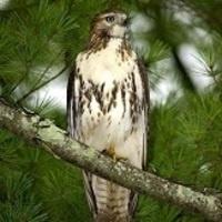 """""""Wings of Wonder – Birds of Prey"""" program"""
