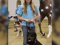 Elko County 4-H Dog Classes