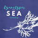 Cyanotypes of the Sea Workshop