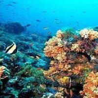 Marine Protected Areas: An Effective Tool For Ocean Conservation? Lecture by Dr. Sarah Lester