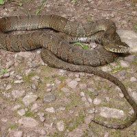 Snakes of Pennsylvania
