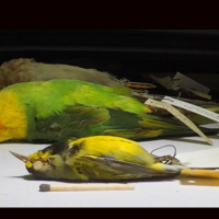 Extinct Birds Project - Exhibition