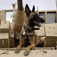 Healing Wounds—How Animals Can Help Our Soldiers