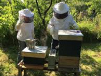 Lunch and Learn with Clemson Extension: Morris Warner, Bees & Bee Keeping