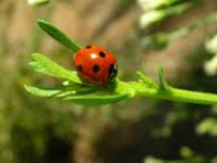 Lunch and Learn with Clemson Extension: LayLa Burgess, Beneficial Insects in the Garden