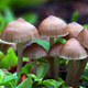 Introduction to Mycology and Mushroom Growing