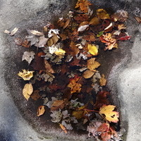 Fall Foliage for Beginners