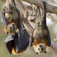 Bat Talk and Walks