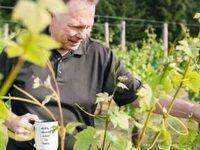 Winemaker Harvest Vineyard Hike