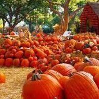 Impossible Acres - Grandpa's Barn U-Pick Pumpkins