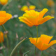 California Native Plant Society Meeting