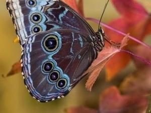 Insectapalooza
